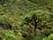 https://sthelena.se/wp-content/uploads/2008/01/forest1.jpg (7095 bytes)